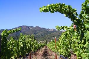 vineyard,-mtns